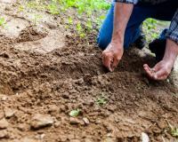 Ερευνητές του ΕΚΠΑ καταπολεμούν οικολογικά φυτικές ασθένειες